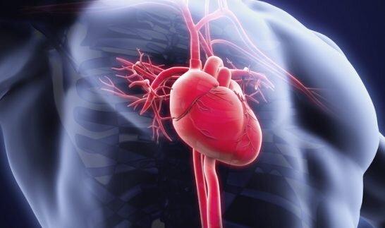 l-karnitin-kullanmanin-10-yan-etkisi