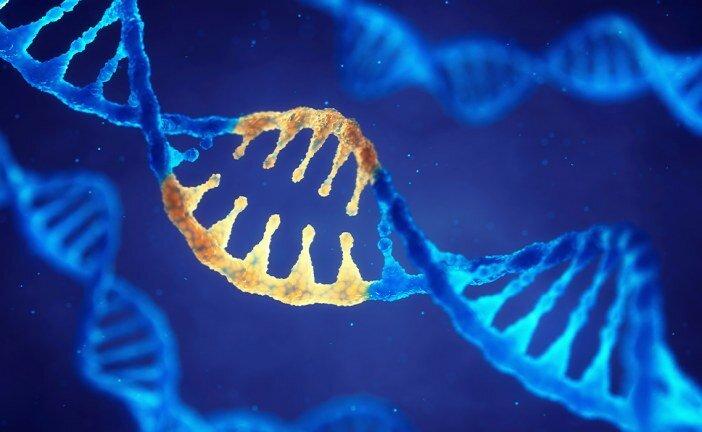 Protein Sentezi Nasıl Gerçekleşir, Aşamaları Nelerdir?